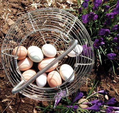 eggbasket_b.jpg