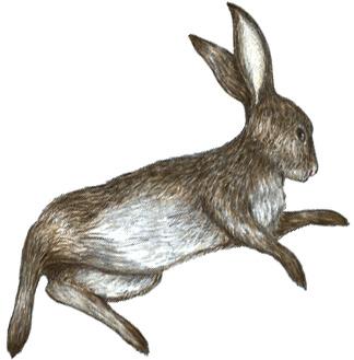 almanac_rabbit