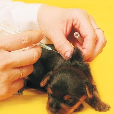 Pet_vaccines_b_0508.jpg