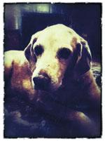 grace_dog