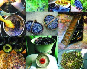 Wine Collage 6