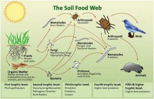soilFoodweb diagram