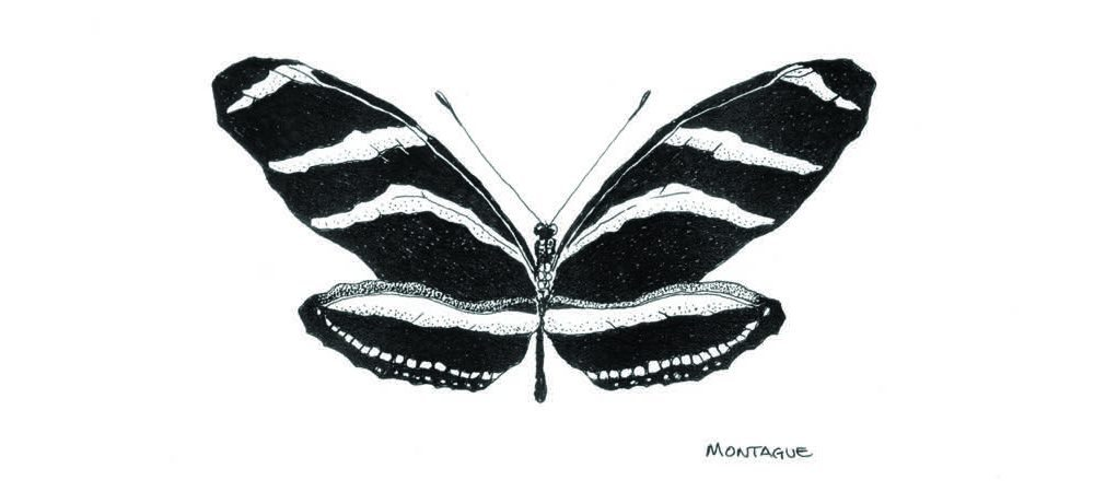 zebralongwing