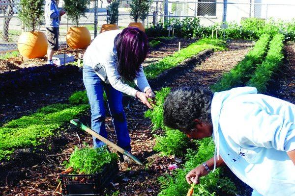 Garden Like a Boss: At home on the farm | Catalyst Magazine