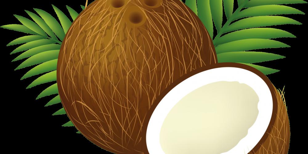 coconut_clipart_cartoon