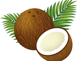 coconut_clipart_cartoon