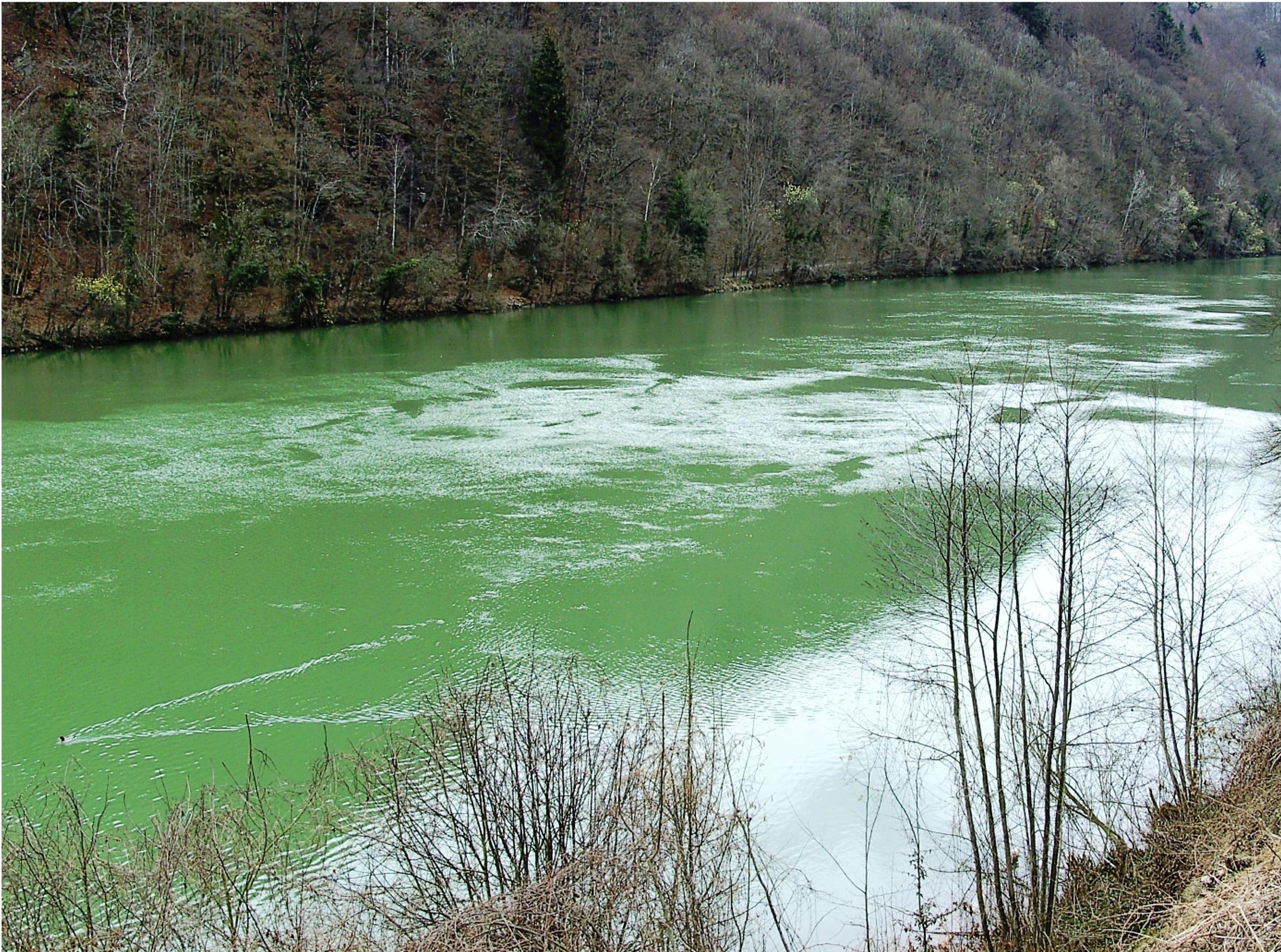 Rüyada Yemyeşil Nehir Görmek