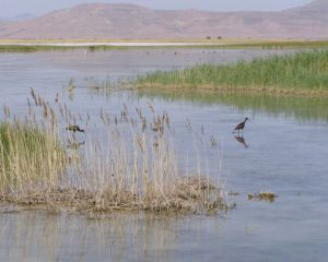 SLC Wetlands