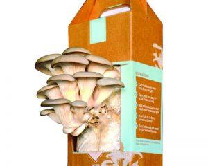 eb80_mushroom_growing_kit