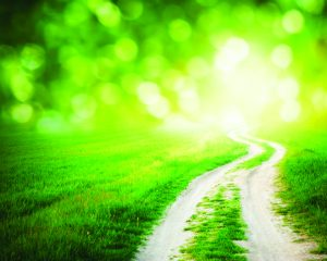 Way to the light. Nature design.