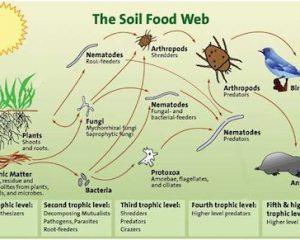 soilFoodweb diagram